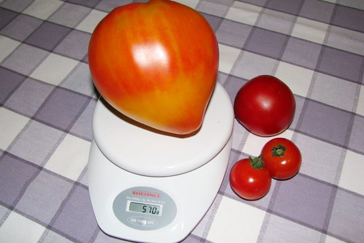 570 Gramm Tomate: Russian Orange