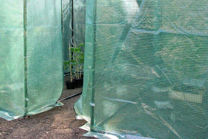 Ab April/Mai ins Tomatenzelt