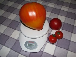 570 Gramm Tomate der Sorte Russian Orange